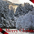 Merry Christmas Card by Belinda Greb
