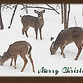 Merry Christmas Card - Whitetail Deer In Snow by Mother Nature