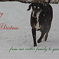 Merry Christmas Critters Hershey by Robyn Stacey