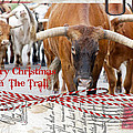 Merry Christmas From The Trail by Toni Hopper