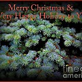 Merry Christmas And Happy Holiday - Blue Pine Holiday And Christmas Card by Miriam Danar