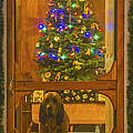 Merry Christmas by Mitch Shindelbower