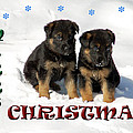 Merry Christmas Puppies by Aimee L Maher ALM GALLERY