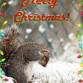 Merry Christmas by Robin Martin