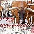 Longhorns Merry Christmas Ya'll by Toni Hopper