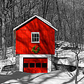 Merry Red Bw by Karol Livote