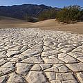 Mesquite Dune Mosaic by Susan Rovira