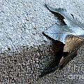 Metal Leaf by Henrik Lehnerer