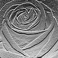 Metal Rose by Carol Lynch