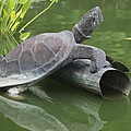 Metal Turtle by Christiane Schulze Art And Photography