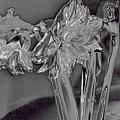 Metallic Amaryllis by Brenda Kean