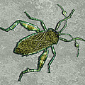 Metallic Green And Gold Prehistoric Insect  by Elaine Plesser