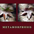 Metamorphosis by AJ  Schibig