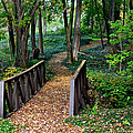 Metroparks Pathway by Frozen in Time Fine Art Photography