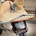 Mexican Burro by John Magyar Photography