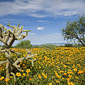 Mexican Golden Poppy Flowers And Cactus by Tom Vezo