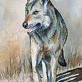 Mexican Grey Wolf by Lyn DeLano