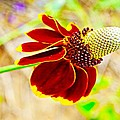 Mexican Hat by Gary Richards
