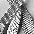 Mexican Revolution, Guitar, Corn by Tina Modotti