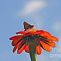 Mexican Sunflower Hat Dance by Byron Varvarigos