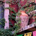 Mexico, San Miguel De Allende, Ivy by Jaynes Gallery