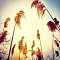 #mgmarts #sunset #bright #beautiful by Marianna Mills