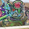 Miami Swamp by Chuck  Hicks