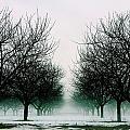 Michigan Cherry Trees In Winter by John McGraw