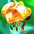 Michigan Lily by Jennifer Smithwell