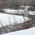Michigan Stream by Linda Kerkau