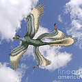 Microraptor by Spencer Sutton
