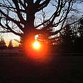 Middle Of The Tree Sunset by Tina M Wenger