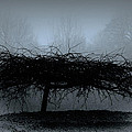 Middlethorpe Tree In Fog Blue by Tony Grider