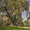Historic Middleton Place  by Dale Powell