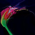 Midnight Bloom by Rabi Khan