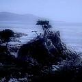 Midnight Cypress by Kathleen Struckle