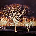 Midnight Glow by Shawna Rowe