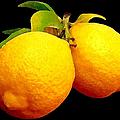 Midnight Lemons by Ben and Raisa Gertsberg