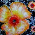 Midnight Poppies by Cj Carroll