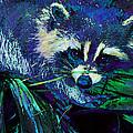 Midnight Racoon by Jane Schnetlage