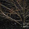 Midnight Snow by Karin Everhart