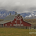 Midway Ranch Barn by Kelly Black