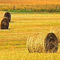 Midwest Farming by Frozen in Time Fine Art Photography