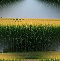 Midwest Gold by Luther Fine Art