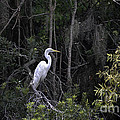 Mighty Heron by Dale Powell