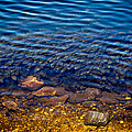 Milfoil Invasion by Nate Wilson