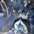 Milkweed In Blue by Renee Croushore