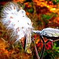 Milkweed by Lisa Amport