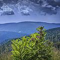Milkweed Plants Along The Blue Ridge Parkway by Randall Nyhof