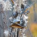 Milkweeds In Autumn by Rowena Throckmorton